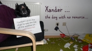 Pet Shaming… Damn, it feels good